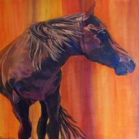 American Mustang Crop
